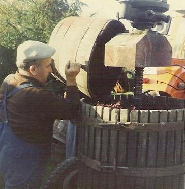 La Vigne et le vin vendange
