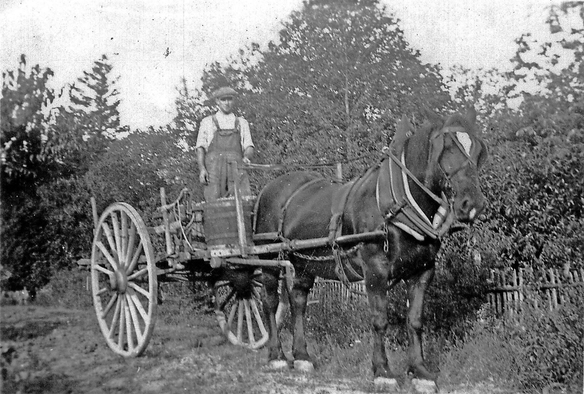 Comporte à cheval en vendange