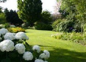 jardins-des-martels-hortensias